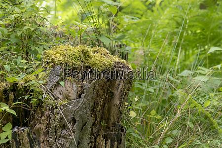 german moor forest landscape with fern