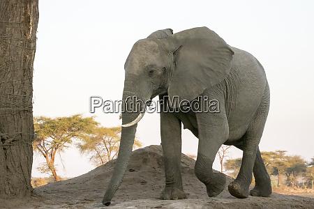 africa botswana senyati safari camp close