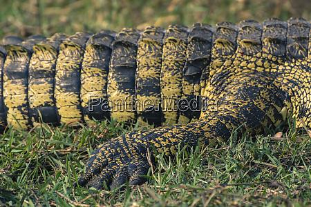botswana chobe national park botswana chobe