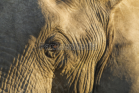 africa botswana moremi game reserve rising