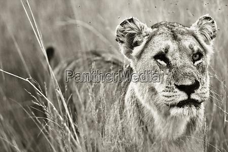 okavango delta botswana close up of