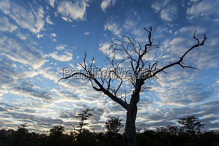 africa botswana moremi game reserve silhouette