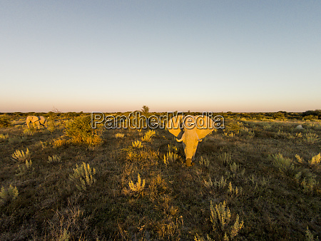 africa botswana nxai pan national park
