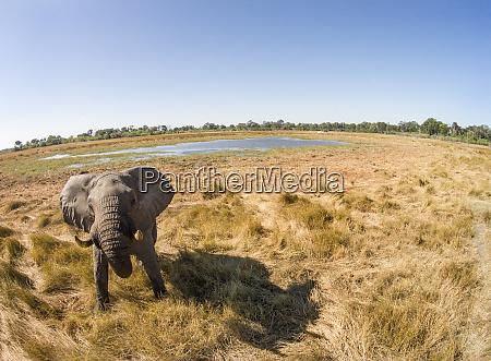 africa botswana moremi game reserve aerial