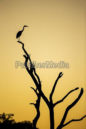 africa botswana chobe national park savuti