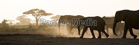 africa kenya amboseli national park backlit