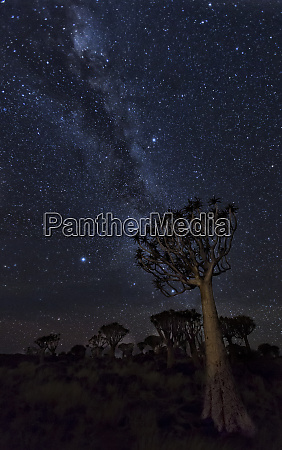 africa namibia milky way and quiver