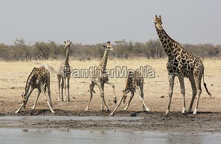 africa namibia etosha national park five