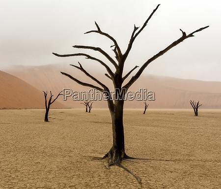 namibia namib naukluft park deadvlei unusual