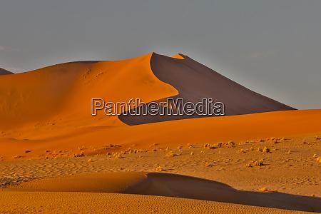 morning light on the sand dunes