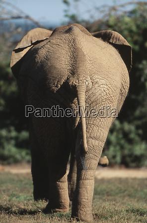 south africa addo elephant national park