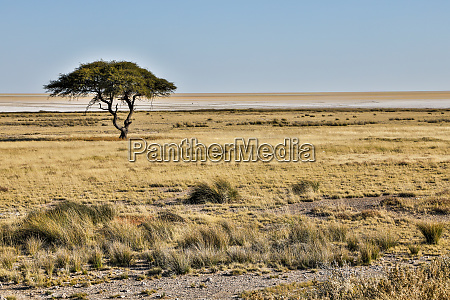 africa namibia etosha national park grassy