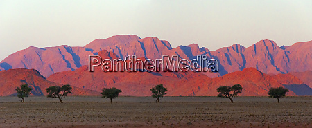 tree with mountain in southern namib