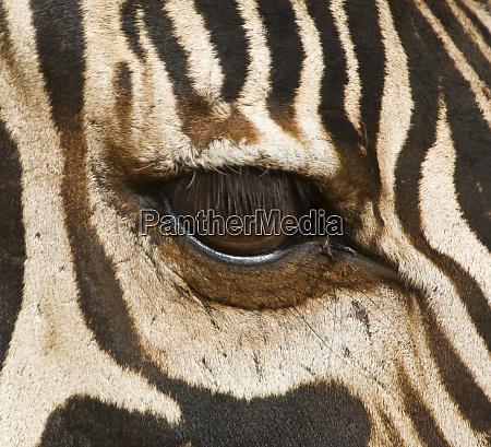 tanzania tarangire national park close up
