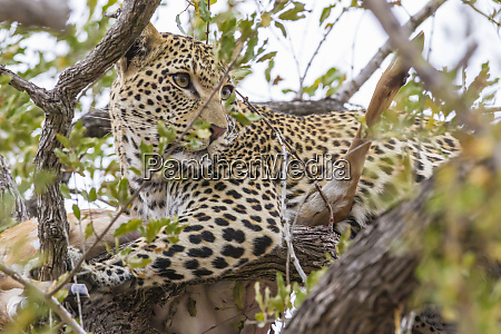 africa south africa londolozi private game