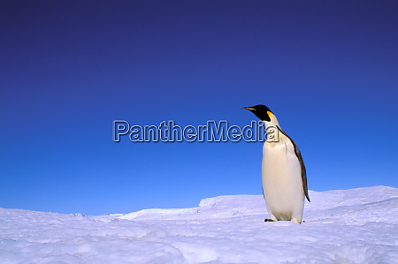 antarctica australian antarctic territory auster ep
