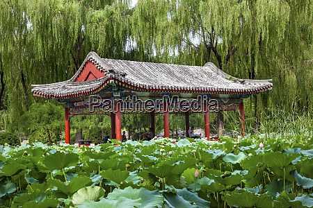 red pavilion lotus pads garden temple