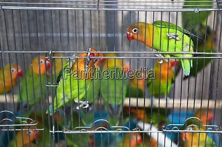 green yellow parrots hong kong bird