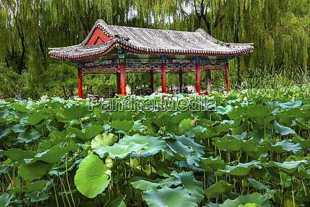 red pavilion by a lotus pond