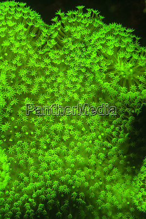 natural occurring fluorescence in underwater hard
