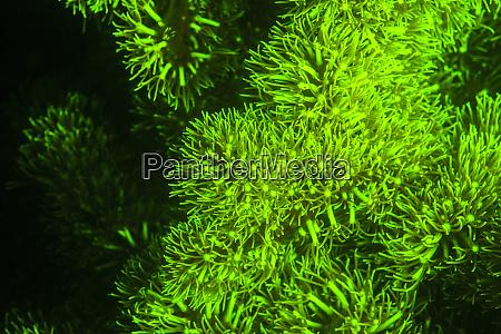natural occurring fluorescence in underwater mushroom