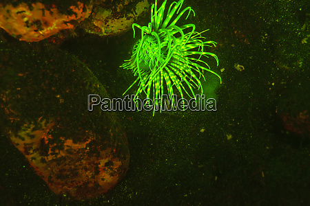 natural occurring fluorescence in underwater tube
