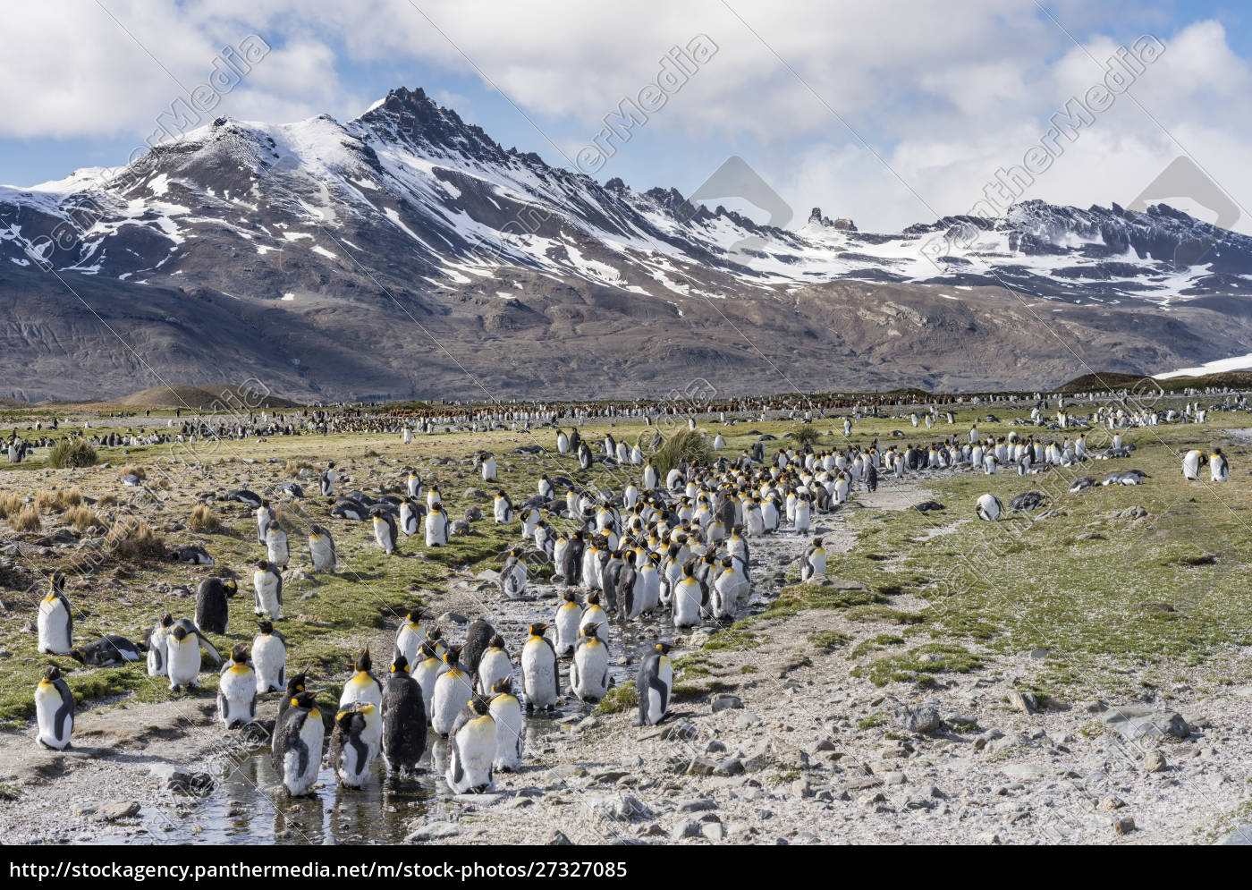king, penguin, (aptenodytes, patagonicus), on, the - 27327085
