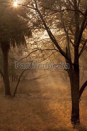 sunrise ranthambore national park sawai madhopur