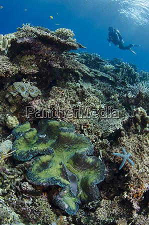 indonesia papua cenderawasih bay diver swims