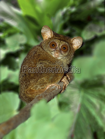 indonesia bali sulawesi close up of