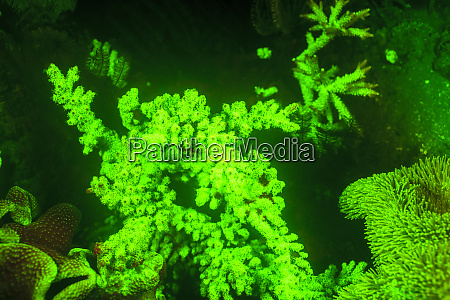 underwater sea life near airport and