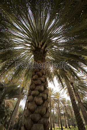 midday sun in palm trees oman
