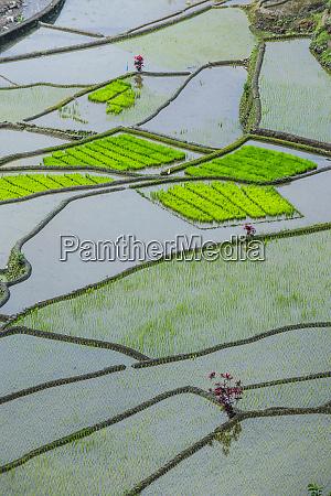 unesco world heritage site rice terraces