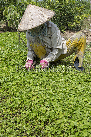 manual field work vietnam