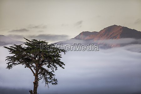 cypress tree in foreground with clouds