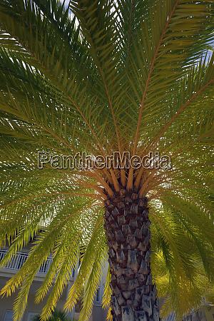 british virgin islands scrub island palm