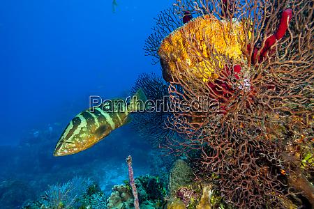 northern bahamas caribbean