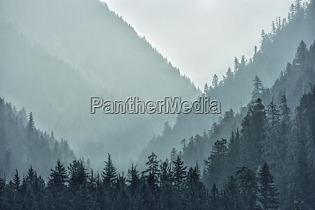 canada british columbia hazy forests in