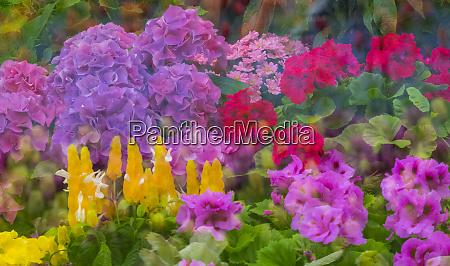 mass colorful planting of flowers