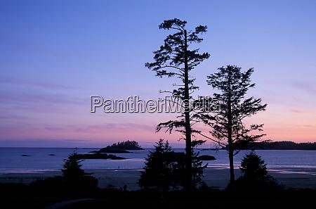 north america canada vancouver island trees