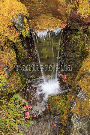spring flowers and stream in garden