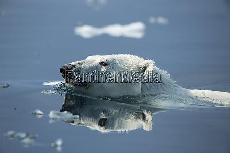 canada nunavut territory repulse bay polar