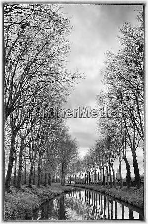 france burgundy nievre trees with bird