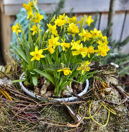 germany freinsheim spring flowers