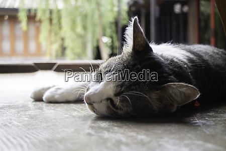 domestic cute cat fell asleep