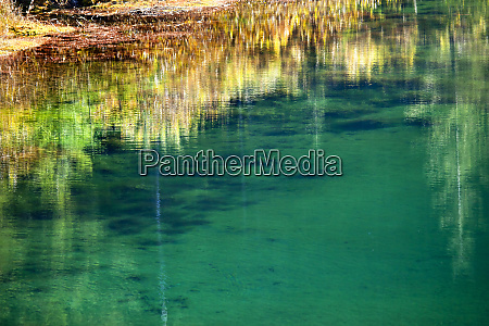 green yellow moss underwater reflection abstract