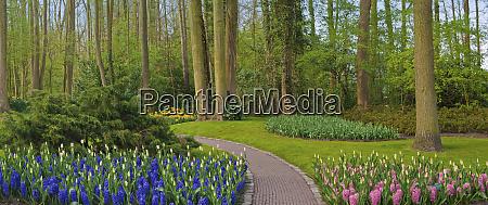 woodland spring garden