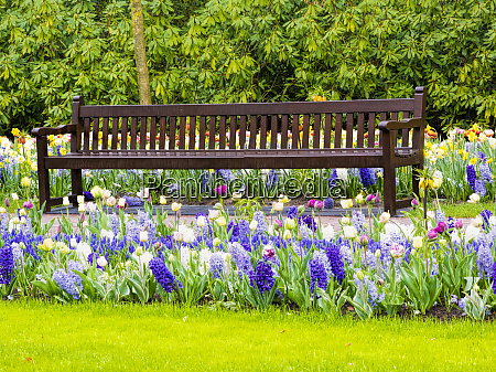 bench in spring flowers