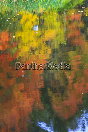 fall colors are reflected in this