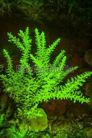 natural occurring green fluorescence in stony